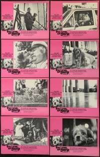 For The Love Of Benji Lobby Card Set